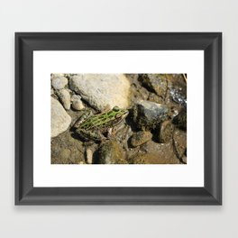 Spotted Green Frog in Mud Framed Art Print