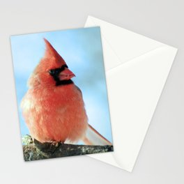 Bright Cardinal Stationery Cards