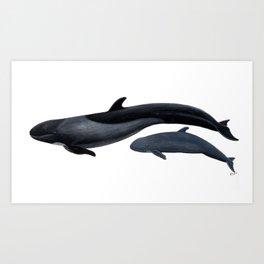 False killer whale Art Print