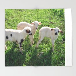 Three Cute Spring Lambs Throw Blanket