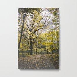 Autumn Colors, I Metal Print
