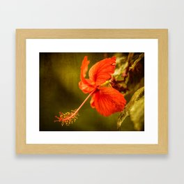 Red Hibiscus Framed Art Print