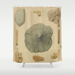 Coral Fossils Shower Curtain