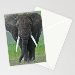Ngorongoro Ele Stationery Cards