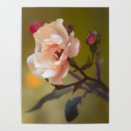 Beautiful spring flower Poster