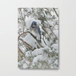 Snowy Woods Blue Jay Metal Print