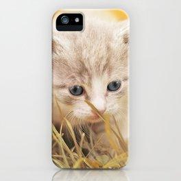 Kitten | Chaton iPhone Case