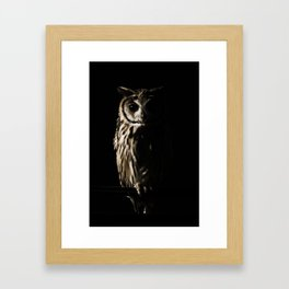 Animal Photography - The Owl Framed Art Print
