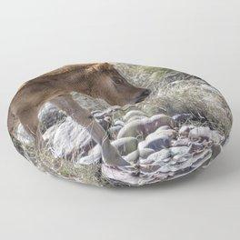 Salt River Wild Foal Floor Pillow