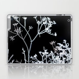Frosted plant at cold winter day on black background Laptop & iPad Skin