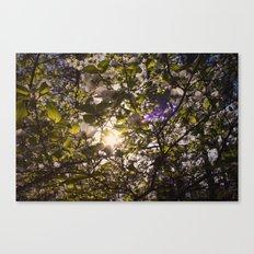 Sunshine Smile Canvas Print