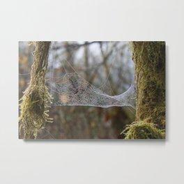 Dewy Spider Web Metal Print