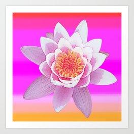 Ninfea Rose Art Print