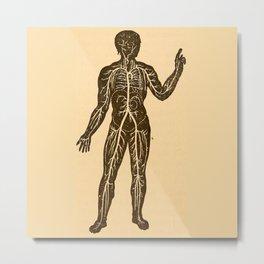 Circulatory system. Metal Print