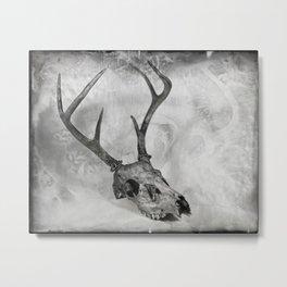 Whitetail Deer Skull (Buck #2) - 8x10 Tintype Photo Metal Print