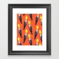 Cockatiel Framed Art Print