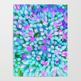 Blue and Hot Pink Succulent Sedum Flowers Detail Poster