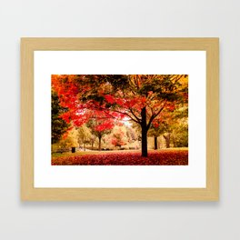 Red Maple in Larz Anderson park. Framed Art Print