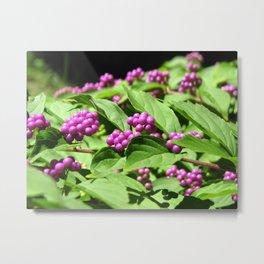 Purple Berries Metal Print