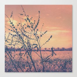 Imperfect Beauty (Beginning of Spring, California Countryside Farm) Canvas Print