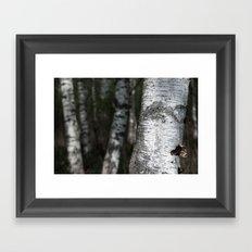 birches II Framed Art Print