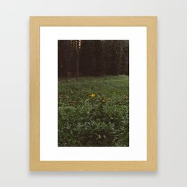 Yosemite National Park XIII Framed Art Print