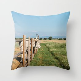 Horny cow behind wooden fence  Throw Pillow