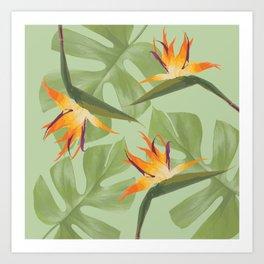 Three Paradise Flowers with Monstera Leaf Art Print
