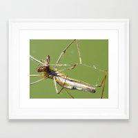 spider Framed Art Prints featuring spider by Dottie
