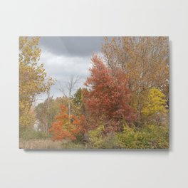Burnished Autumn Metal Print