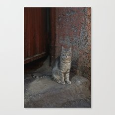 Marrakesh Cat Canvas Print