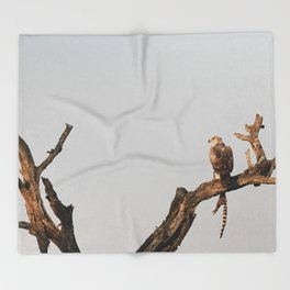 Hawk Eagle with its Catch Throw Blanket