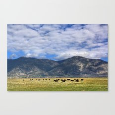 Field of Cows Canvas Print