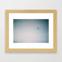 Larus Canus Framed Art Print