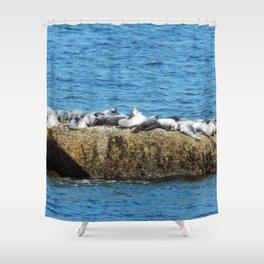 Herd of Seals on a Huge Boulder Shower Curtain