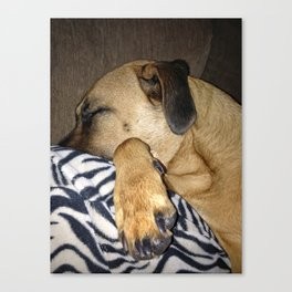 Lovable Lucie Canvas Print