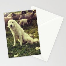 Herding dog, female, south of Israel, scaned sx-70 Polaroid Stationery Cards