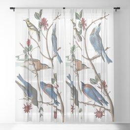 Townsends warbler, Birds of America, Audubon Plate 393 Sheer Curtain