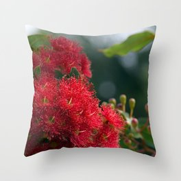 Red Flowering Gum Blossoms 2 Throw Pillow