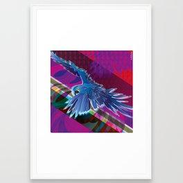 Arara-azul (Hyacinth Macaw) Framed Art Print