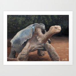 Galapagos Tortoise Art Print
