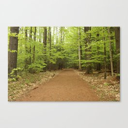 Northern Forest Canvas Print
