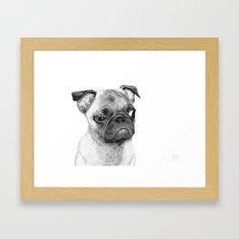 Biggy // Pug Framed Art Print