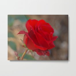 Rose Macro II Metal Print