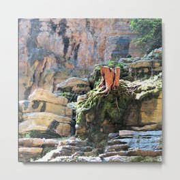 Yangtze River roots China Metal Print