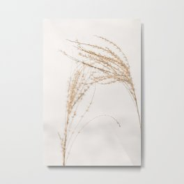 Plumes of ornamental grass 'Miscanthus Sinensis Silberfeder' in the snow. Metal Print
