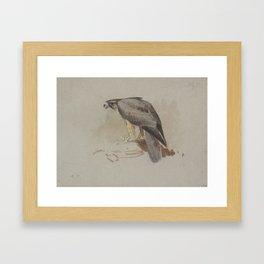 Archibald Thorburn (1860-1935) A Hawk Framed Art Print