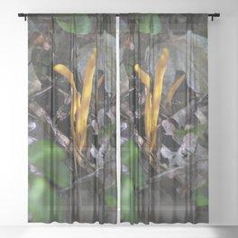 M Study 3 Sheer Curtain