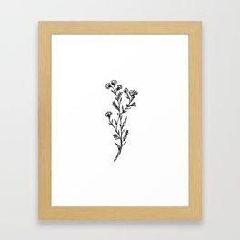 Buttercup Sprig Framed Art Print