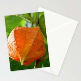 Physalis II Stationery Cards